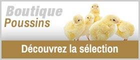 La Boutique poussins