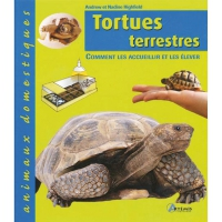 TORTUES TERRESTRES ANIMAUX DOMESTIQUE