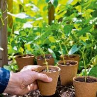 Pots biodégradables ronds diam.6cm  (Lot de 96)