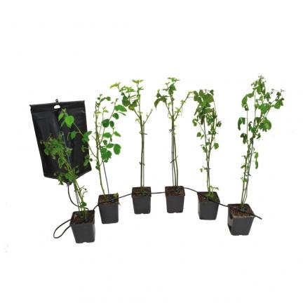 ducatillon kit d 39 arrosage par gravit 6 goutteurs jardin. Black Bedroom Furniture Sets. Home Design Ideas