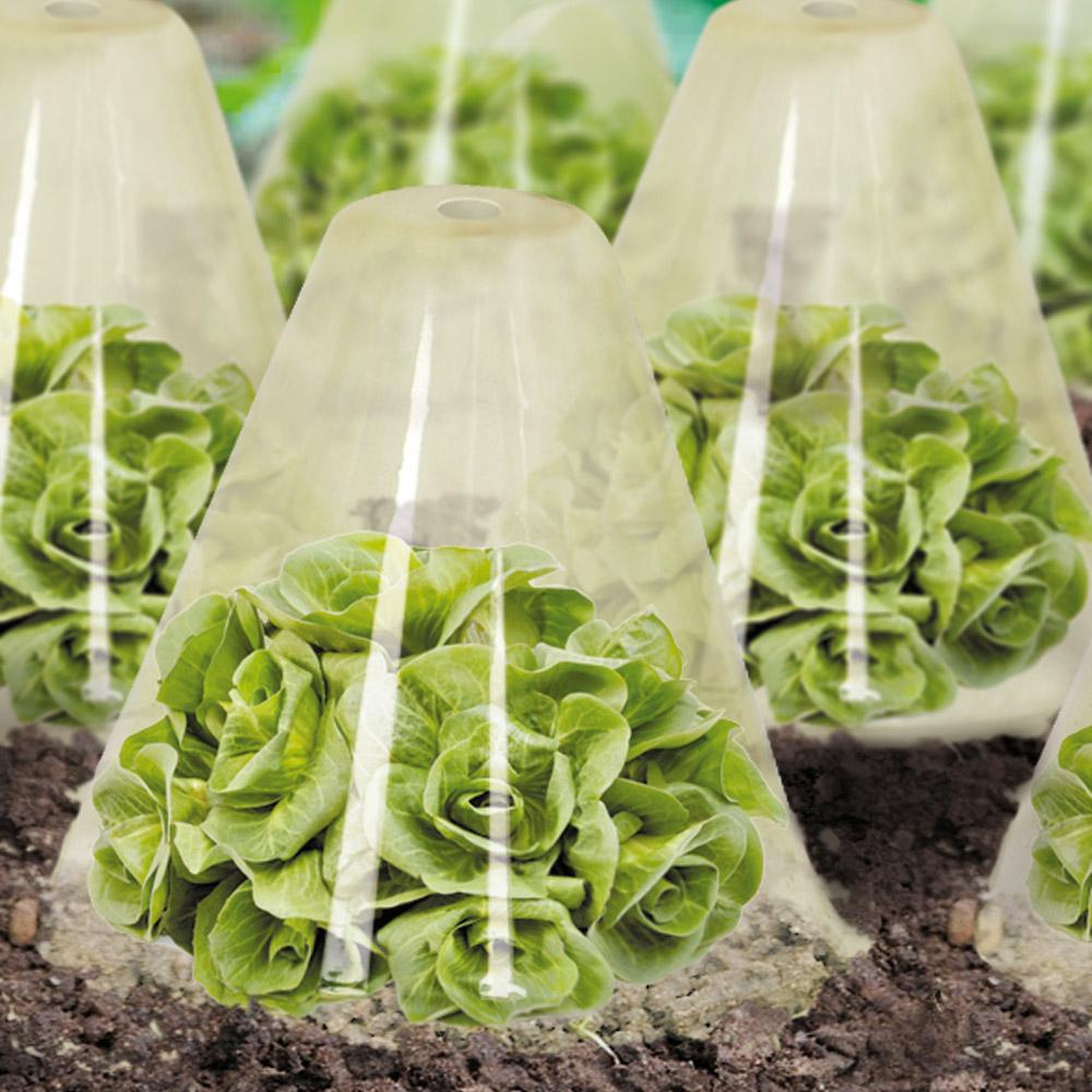 Ducatillon 12 cloches de for age pour salades jardin - Cloche en plastique transparent jardin ...