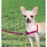 Harnais chien Easy Walk® framboise