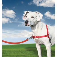 Harnais chien Easy Walk® rouge