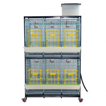 Cage reproducteurs/pondeuses 2 étages