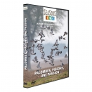 DVD Palombes, pigeons : une passion