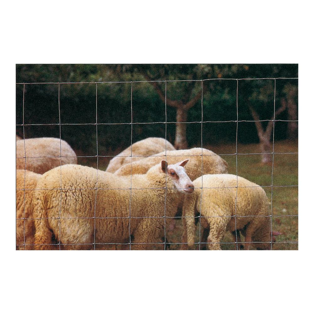 ducatillon grillage moutons et ch vres elevage. Black Bedroom Furniture Sets. Home Design Ideas