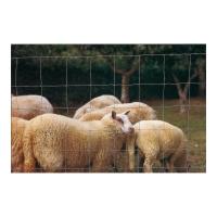 Grillage moutons et chévres