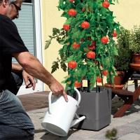 Tuteurs pour Plantes Grimpantes avec Arrosage