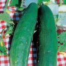 Concombre Vert long maraicher