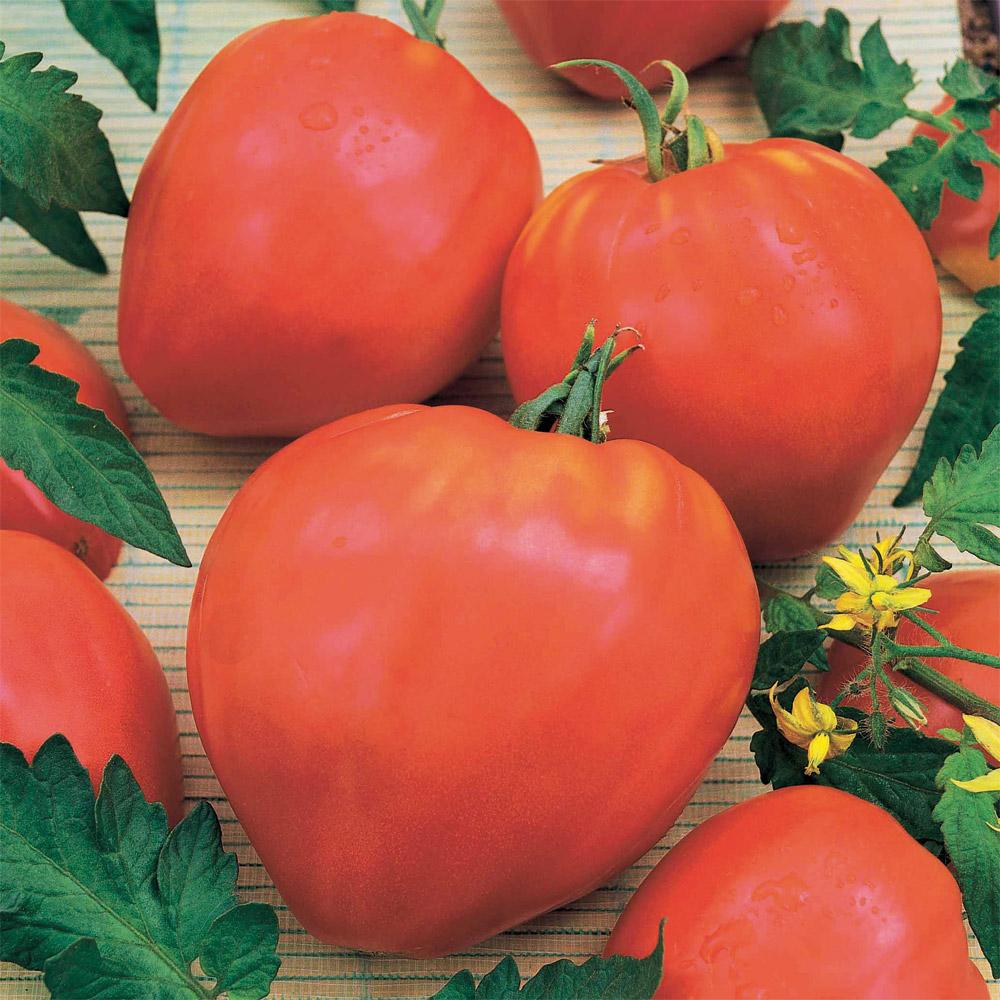 Ducatillon tomate coeur de boeuf jardin - Planter des tomates coeur de boeuf ...