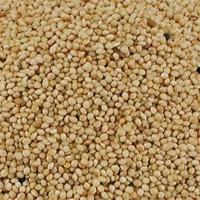 Graine de Millet rond Blanc