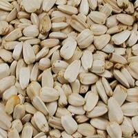 Grosses graines de Tournesol blanches