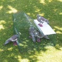 Piège à pigeons double entrée