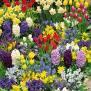 Collection 200 bulbes floraisons printanières