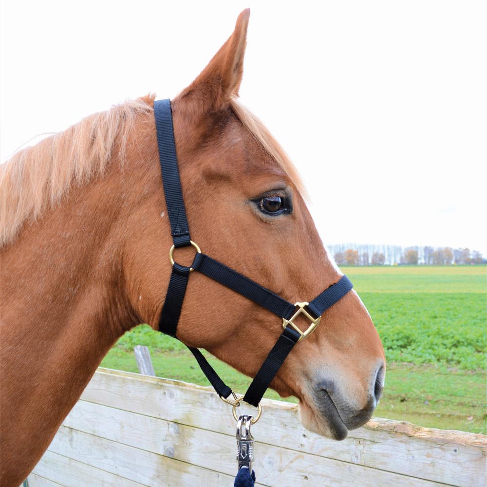 licol cheval