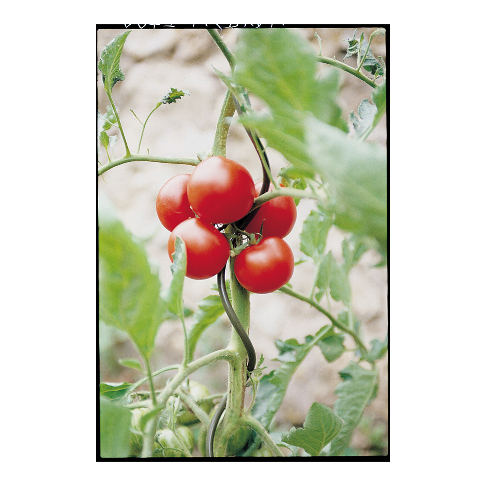 ducatillon tuteurs spirale pour tomates jardin. Black Bedroom Furniture Sets. Home Design Ideas