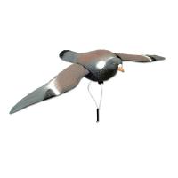 Appelant pigeon volant (ailes battantes)