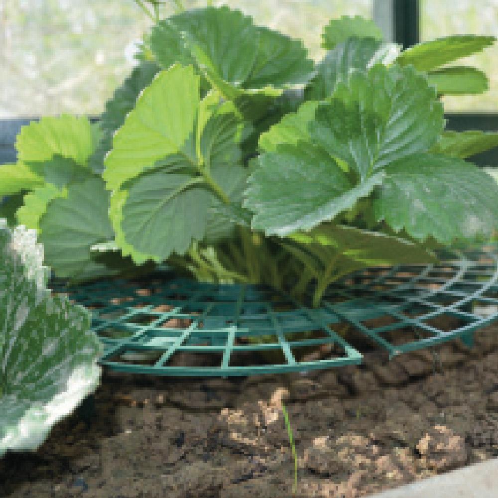 ducatillon 5 supports pour fraisiers jardin. Black Bedroom Furniture Sets. Home Design Ideas