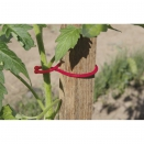 25 clips � tomates