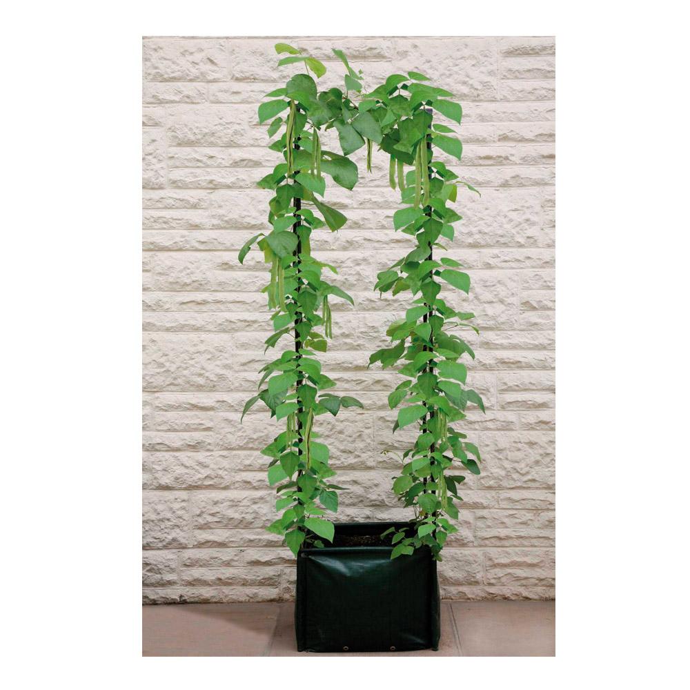 Boutiques ducatillon belgique jardini re plantes for Plantes belgique