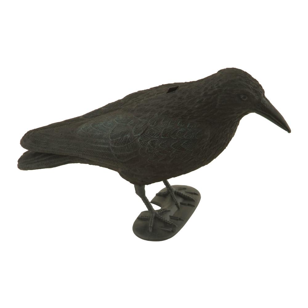 ducatillon appelant corbeau chasse. Black Bedroom Furniture Sets. Home Design Ideas
