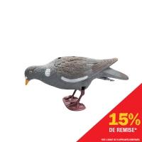 Appelant pigeon qui picore