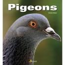 Livre: Pigeons
